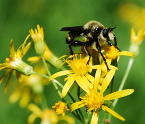 Pollinators: Keeping Company with Flowers